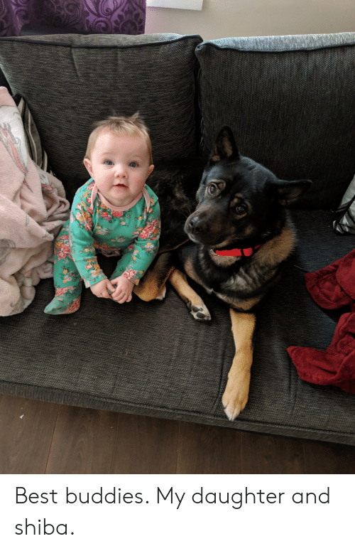 Best, Daughter, and Buddies: Best buddies. My daughter and shiba.