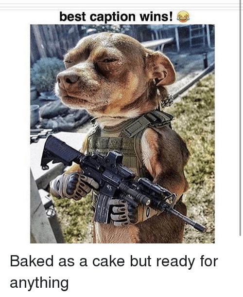 Baked, Memes, and Best: best caption wins! Baked as a cake but ready for anything