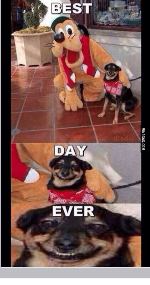 best day ever via 9gag com 14037112 best day ever via 9gagcom best day ever meme on me me