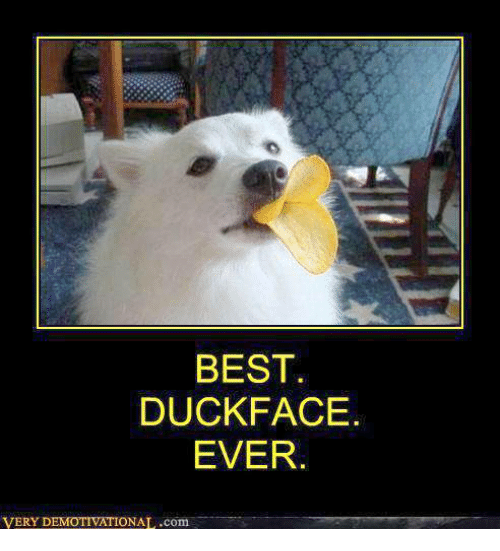 [Image: best-duck-face-ever-very-d-onal-com-9556547.png]