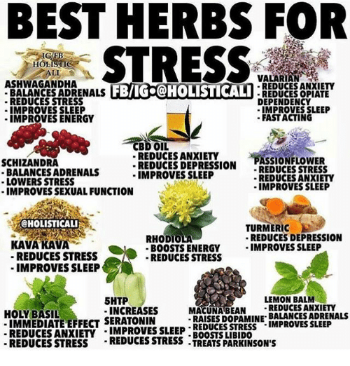 Best herbs for stress and anxiety