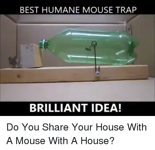 25 best memes about mouse trap mouse trap memes for How do you draw a mouse