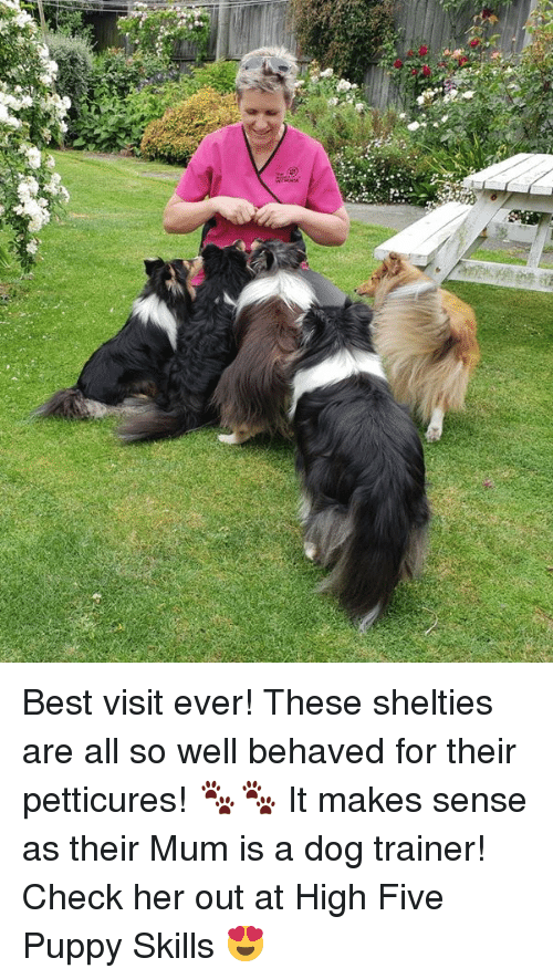 best visit ever these shelties are all so well behaved for their rh me me