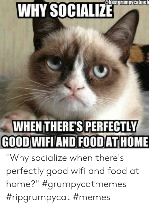 """Food, Memes, and Good: @bestgrumpycatmeh  WHY SOCIALIZE  WHEN THERE'S PERFECTLY  GOODWIFIAND FOODATHOME """"Why socialize when there's perfectly good wifi and food at home?""""  #grumpycatmemes #ripgrumpycat #memes"""