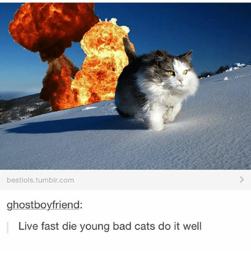 25 best memes about yukki yukki memes bad cats and memes bestlolstumblr ghostboyfriend live fast die young bad cats do it well sciox Image collections
