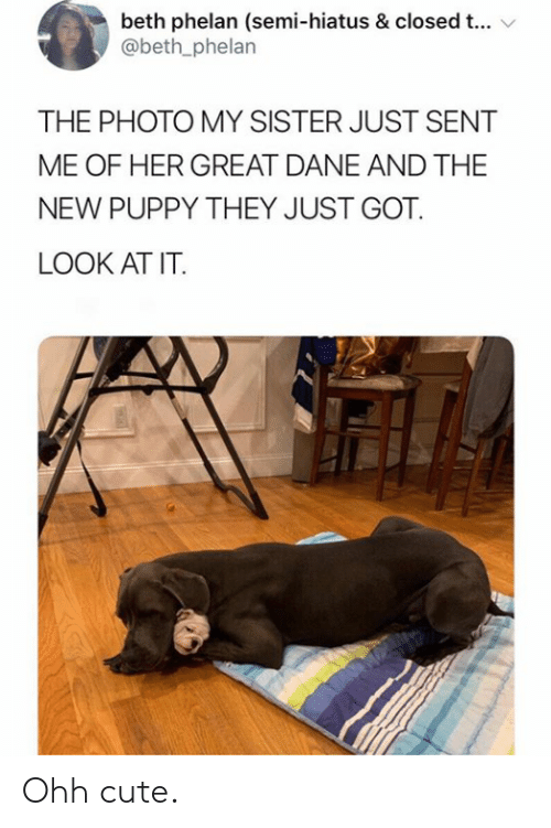 Cute, Puppy, and Got: beth phelan (semi-hiatus & closed t...  @beth_phelan  THE PHOTO MY SISTER JUST SENT  ME OF HER GREAT DANE AND THE  NEW PUPPY THEY JUST GOT  LOOK AT IT. Ohh cute.