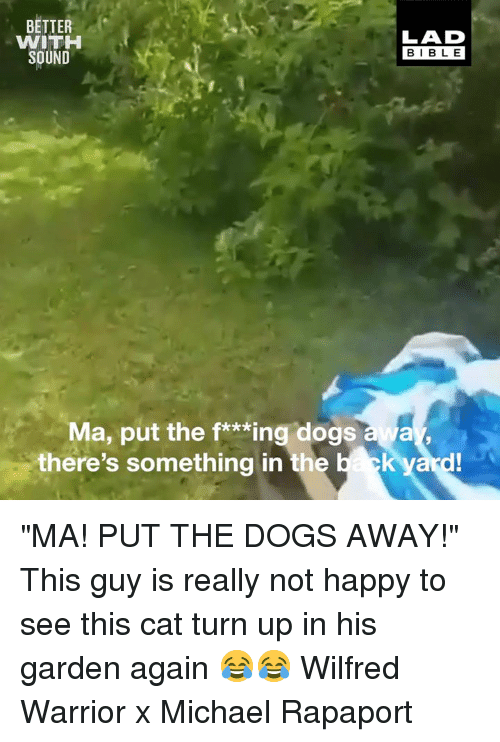 """Dank, Dogs, and Turn Up: BETTER  WITH  SOUND  LAD  BIBLE  Ma, put the f*Mingdogsaa  there's something in the  yard """"MA! PUT THE DOGS AWAY!"""" This guy is really not happy to see this cat turn up in his garden again 😂😂  Wilfred Warrior x Michael Rapaport"""
