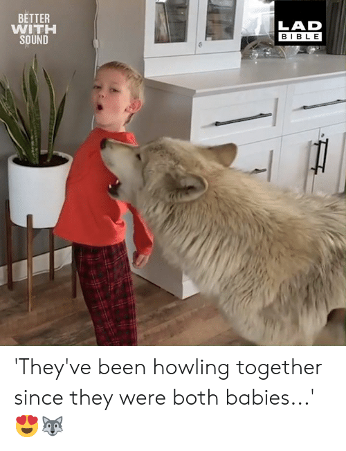 Dank, Bible, and Been: BETTER  WITH  SOUND  LAD  BIBLE 'They've been howling together since they were both babies...' 😍🐺