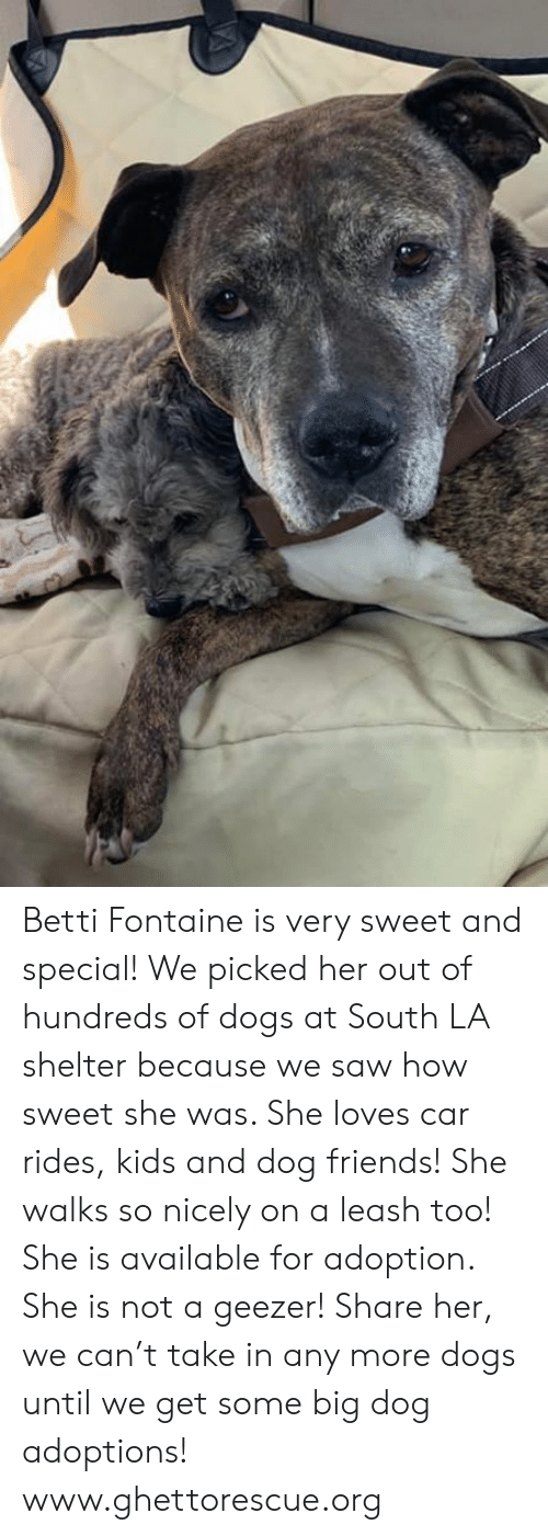 Dogs, Friends, and Memes: Betti Fontaine is very sweet and special!  We picked her out of hundreds of dogs at South LA shelter because we saw how sweet she was.  She loves car rides, kids and dog friends!  She walks so nicely on a leash too!  She is available for adoption.  She is not a geezer!  Share her, we can't take in any more dogs until we get some big dog adoptions!    www.ghettorescue.org