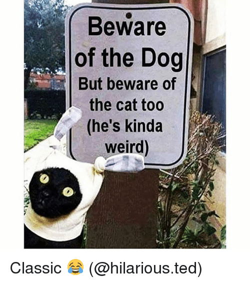 Memes, Ted, and Weird: Beware  of the Dog  But beware of  the cat too  (he's kinda  weird Classic 😂 (@hilarious.ted)