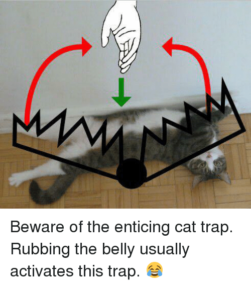 What's happening in your life? - Page 6 Beware-of-the-enticing-cat-trap-rubbing-the-belly-usually-15366126