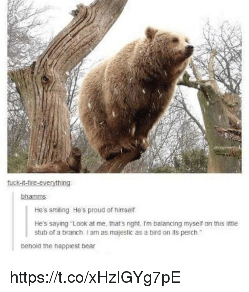 """Memes, Bear, and Proud: bhamms  He's smiling He's proud of himsei  He's saying """"Look at me, tnat's right, I'm balancing myseif on this littie  stub of a branch I am as majestic as a bird on its perch  behold the happiest bear https://t.co/xHzIGYg7pE"""
