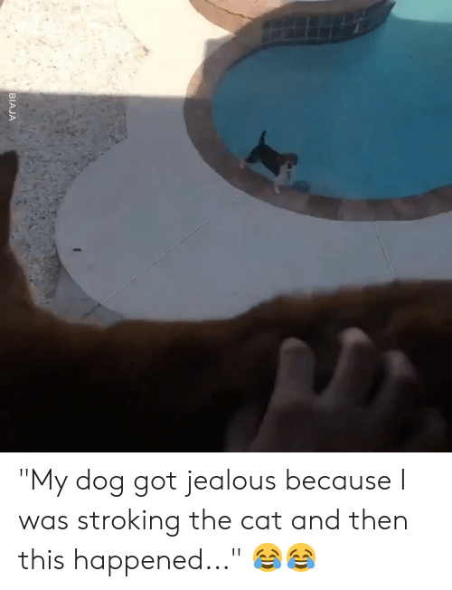 "Dank, Jealous, and 🤖: BIAJA ""My dog got jealous because I was stroking the cat and then this happened..."" 😂😂"