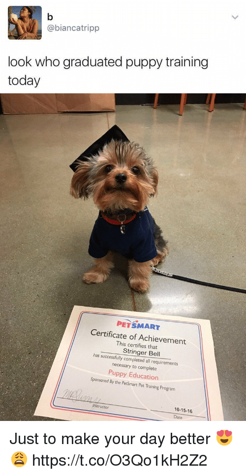 Tripp Look Who Graduated Puppy Training Today Petsmart Certificate
