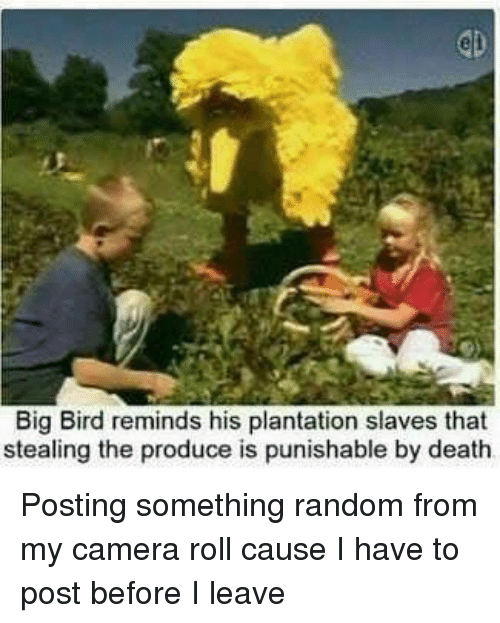 Big Bird Reminds His Plantation Slaves That Stealing The