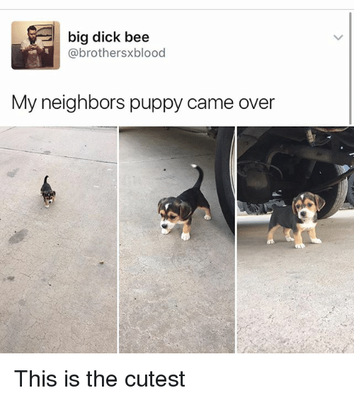 Big Dick, Memes, and Dick: big dick bee  (a brothersxblood  My neighbors puppy came over This is the cutest