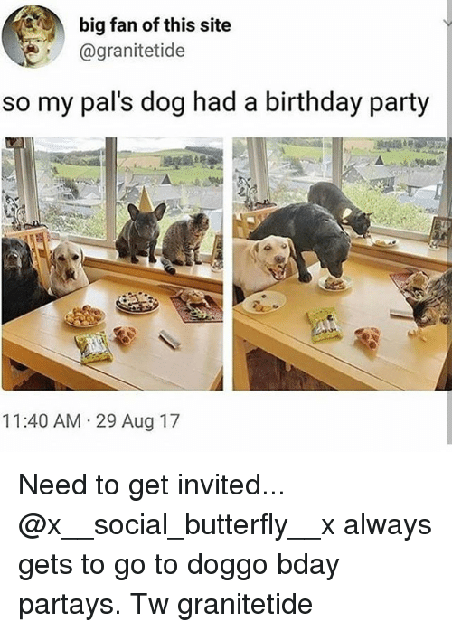 Birthday, Memes, and Party: big fan of this site  @granitetide  so my pal's dog had a birthday party  11:40 AM 29 Aug 17 Need to get invited... @x__social_butterfly__x always gets to go to doggo bday partays. Tw granitetide