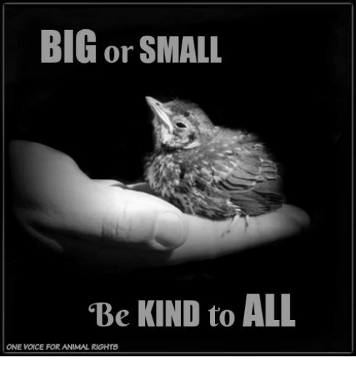 Big Or Small Be Kind To All One Voice For Animal Rights Meme On Meme