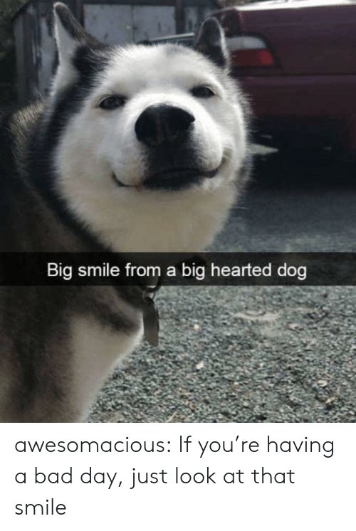 Bad, Bad Day, and Tumblr: Big smile from a big hearted dog awesomacious:  If you're having a bad day, just look at that smile