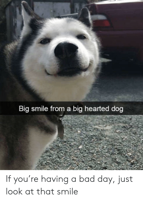 Bad, Bad Day, and Smile: Big smile from a big hearted dog If you're having a bad day, just look at that smile