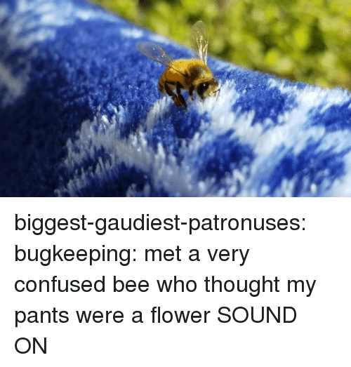 Confused, Target, and Tumblr: biggest-gaudiest-patronuses: bugkeeping: met a very confused bee who thought my pants were a flower SOUND ON
