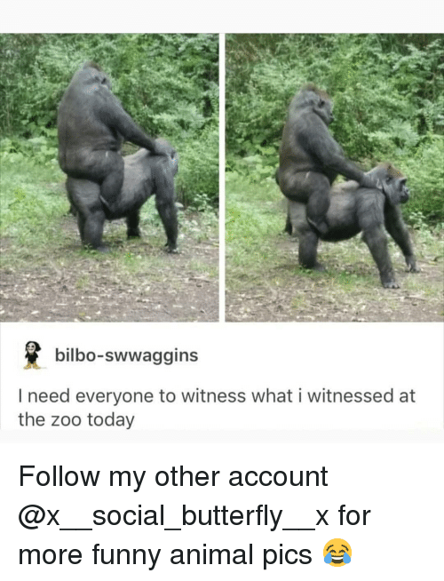 Bilbo, Funny, and Memes: bilbo-swwaggins  I need everyone to witness what i witnessed at  the zoo today Follow my other account @x__social_butterfly__x for more funny animal pics 😂