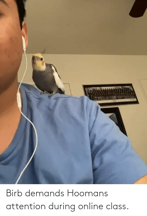 Class, Online, and Attention: Birb demands Hoomans attention during online class.