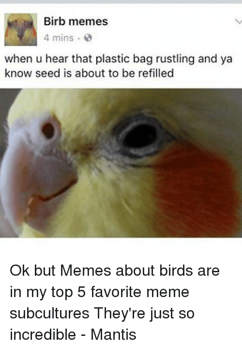 birb memes 4 mins when u hear that plastic bag 20657452 birb memes 4 mins when u hear that plastic bag rustling and ya know