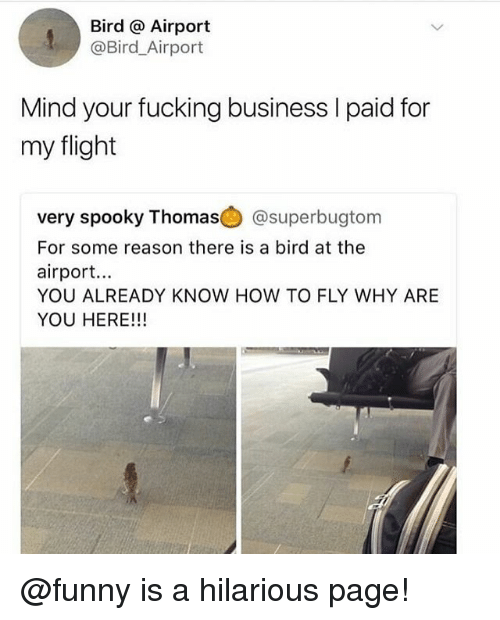 Fucking, Funny, and Memes: Bird @ Airport  @Bird_Airport  Mind your fucking business I paid for  my flight  very spooky Thomas@) @superbugtom  For some reason there is a bird at the  airport...  YOU ALREADY KNOW HOW TO FLY WHY ARE  YOU HERE!!! @funny is a hilarious page!