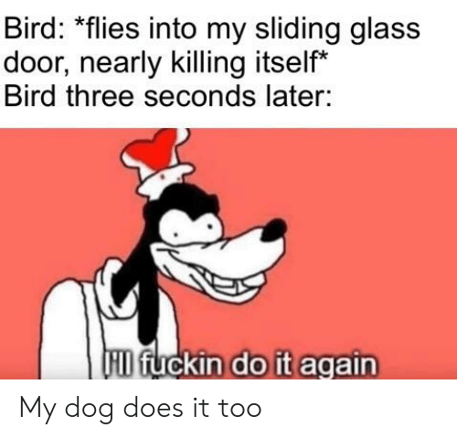 Do It Again, Dank Memes, and Dog: Bird: *flies into my sliding glass  door, nearly killing itself*  Bird three seconds later:  HD fuckin do it again My dog does it too