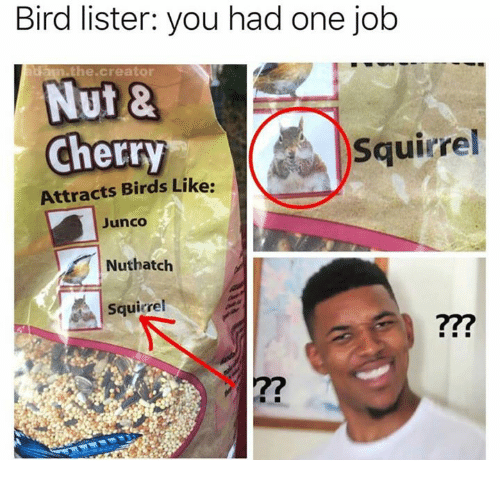 Birds, Squirrel, and Job: Bird lister: you had one job  di  the.creator  Nut &  Cherry  Squirrel  Attracts Birds Like:  Junco  Nuthatch  Squirrel  ?77  ?7
