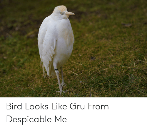 Gru, Despicable Me, and Despicable: Bird Looks Like Gru From Despicable Me