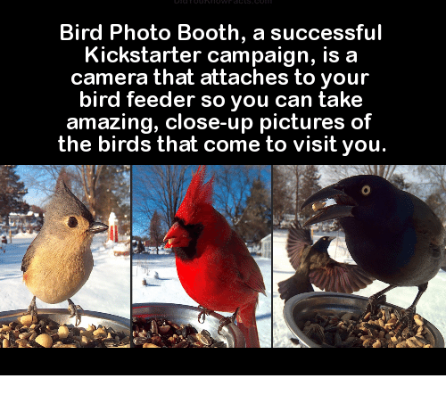 bird photo booth a successful kickstarter campaign is a camera 12059745 ✅ 25 best memes about feeder feeder memes