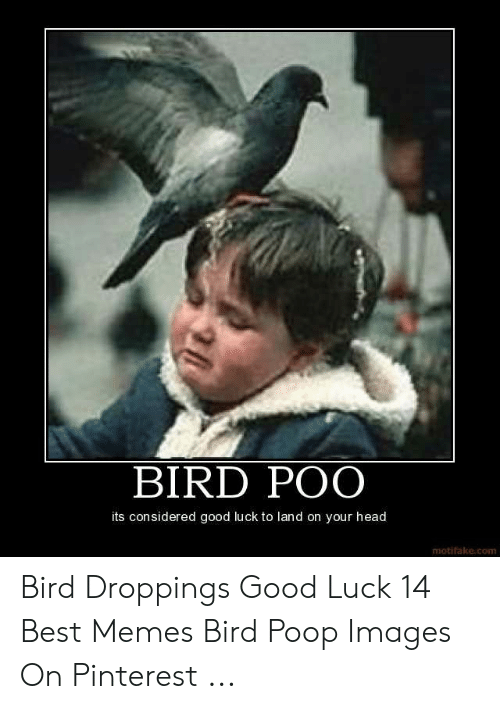 Bird Poo Its Considered Good Luck To Land On Your Head Motifakecom