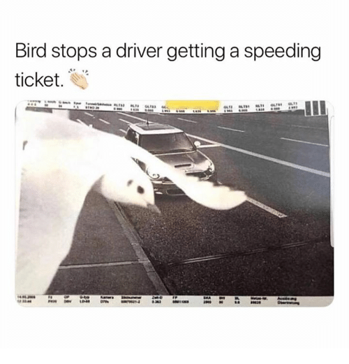Bird Stops a Driver Getting a Speeding Ticket | Driver Meme on ME ME