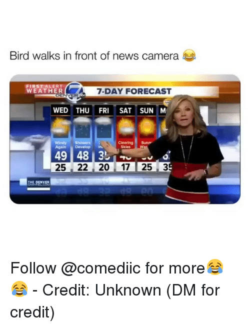 Bird Walks in Front of News Camera WEATHER 7-Day FORECAST ENVER WED