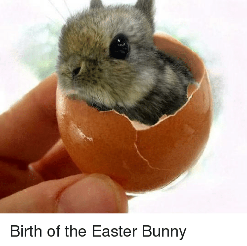 Easter, Funny, and Bunny: Birth of the Easter Bunny