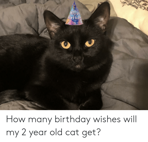 Birthday Old And How Birthd Many Wishes Will My 2 Year