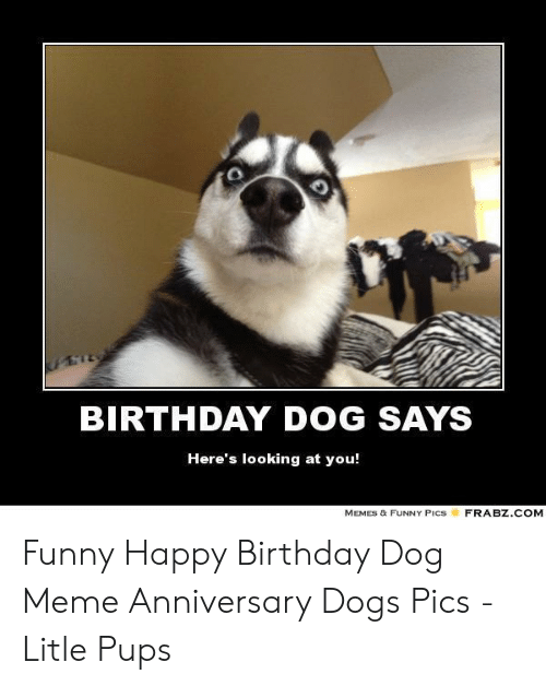 Birthday Dog Says Here S Looking At You Memes Funny Pics Frabzcom Funny Happy Birthday Dog Meme Anniversary Dogs Pics Litle Pups Birthday Meme On Me Me