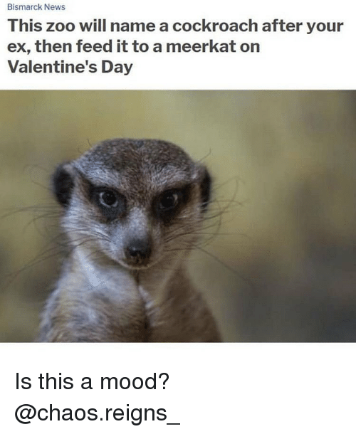 Memes, Mood, and News: Bismarck News  This z  ex, then feed it to a meerkat on  Valentine's Day  oo will name a cockroach after your Is this a mood? @chaos.reigns_