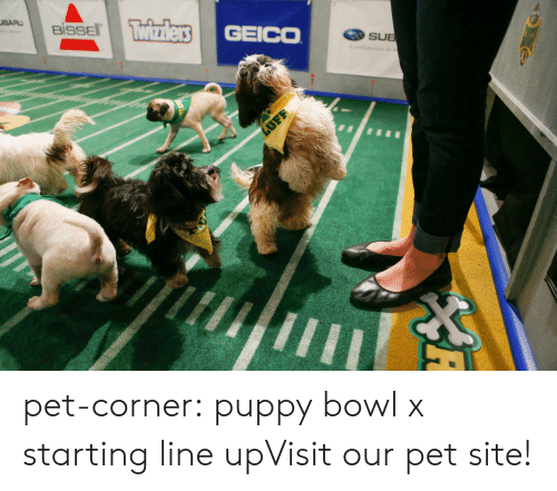 Cats, Cute, and Tumblr: BİSSEl.  GEICO  SUE  c. pet-corner:  puppy bowl x starting line upVisit our pet site!