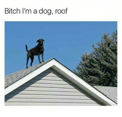 Bitch, Dog, And Roofing: Bitch Iu0027m A Dog, Roof