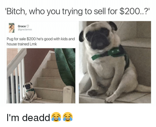 """Funny, Good, and House: Bitch, who you trying to sell for $200..?""""  Grace  V  @greciamxo  Pug for sale $200 he's good with kids and  house trained Lmk I'm deadd😂😂"""