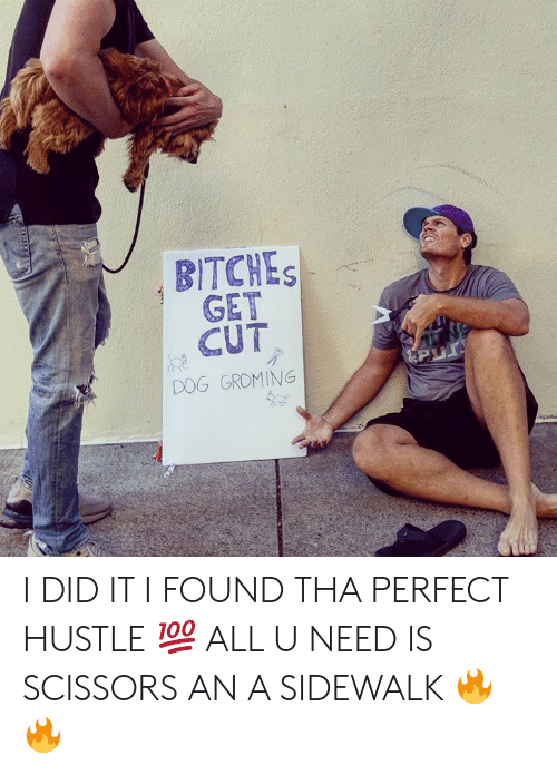 Memes, 🤖, and Dog: BITCHES  GET  CUT  DOG GROMING I DID IT I FOUND THA PERFECT HUSTLE 💯 ALL U NEED IS SCISSORS AN A SIDEWALK 🔥🔥
