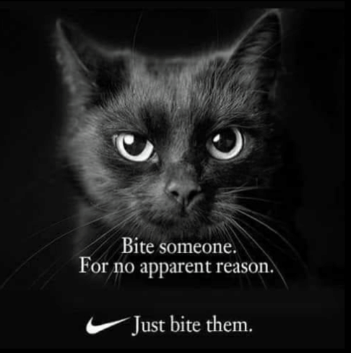 Memes, Reason, and 🤖: Bite someone.  or no apparent reason  Just bite them.