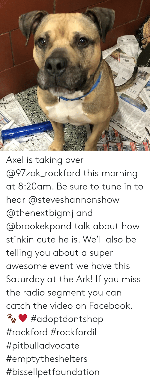 Cute, Facebook, and Memes: BITUARIES Axel is taking over @97zok_rockford this morning at 8:20am. Be sure to tune in to hear @steveshannonshow @thenextbigmj and @brookekpond talk about how stinkin cute he is. We'll also be telling you about a super awesome event we have this Saturday at the Ark! If you miss the radio segment you can catch the video on Facebook. 🐾♥️ #adoptdontshop #rockford #rockfordil #pitbulladvocate #emptytheshelters #bissellpetfoundation