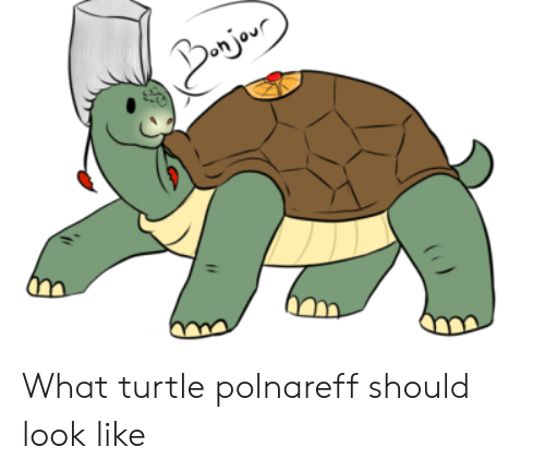 Turtle, What, and Look: Bjor What turtle polnareff should look like