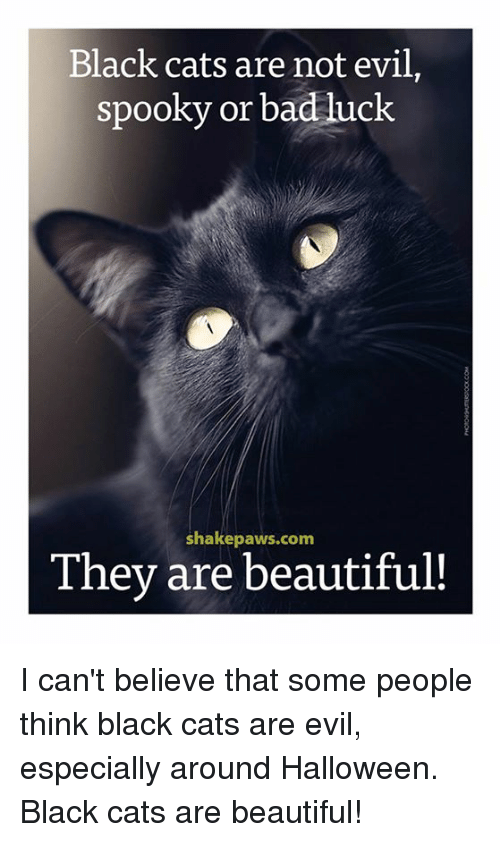 Bad, Beautiful, and Cats: Black cats are not evil,  spooky or bad luck  shakepaws.com  They are beautiful! I can't believe that some people think black cats are evil, especially around Halloween. Black cats are beautiful!