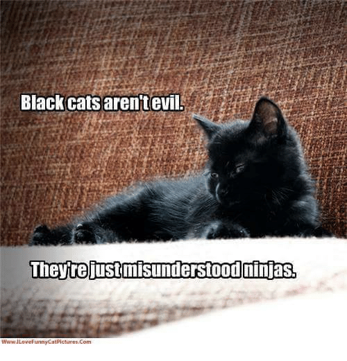 black cats arent evil they rejustmisunderstoodninias wiwwailovefunnycatpictures com 4798263 ✅ 25 best memes about black cat black cat memes