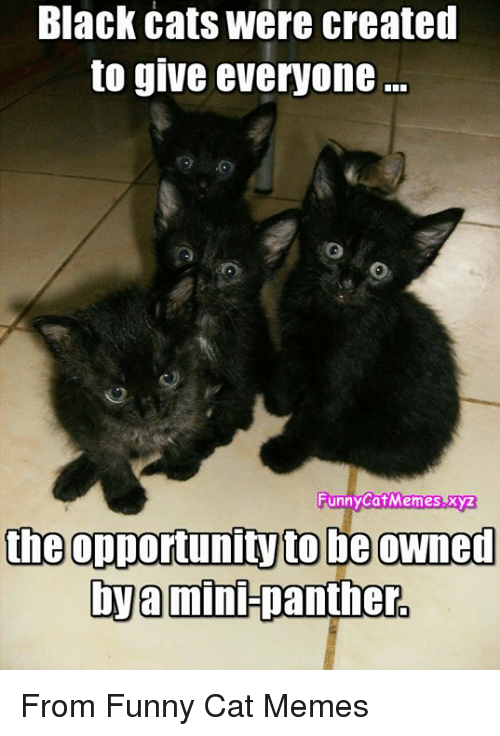 Black Cats Were Created To Give Everyone Funny Cat Memesxyz The